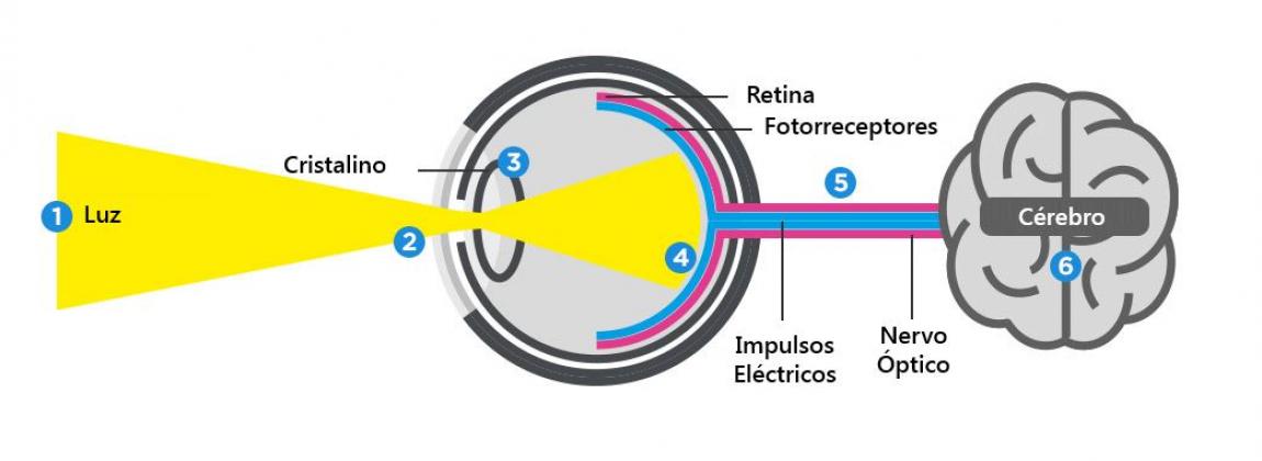 funcionamento do olho